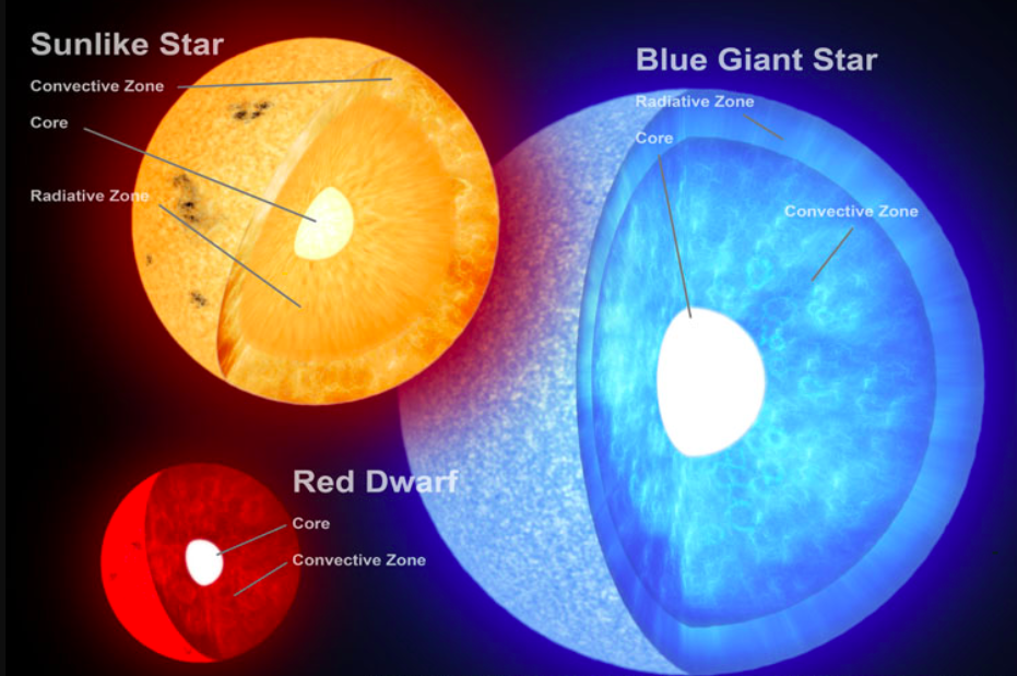 Three stars shown, small red dwarf, a yellow sun-like star and a blue giant star. Each have a cross section cut out revealing the differences in their interior structures.