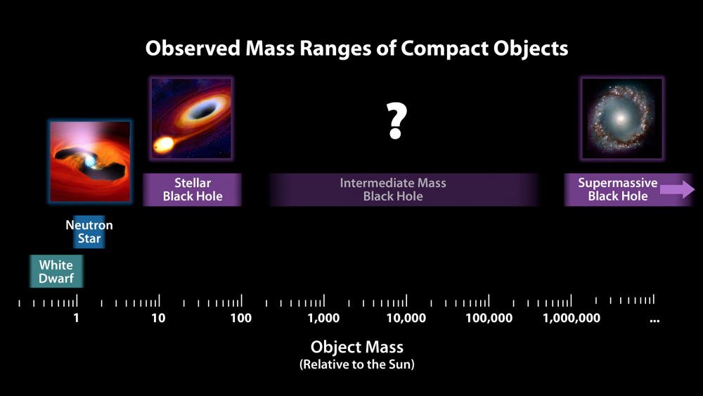 Diagram showing different mass objects relative to Sun's mass. On left is a white dwarf and neutron star. Then a stellar mass black hole. There is a question mark where there is an intermediate black hole. And on the far right is the supermassive black hole.